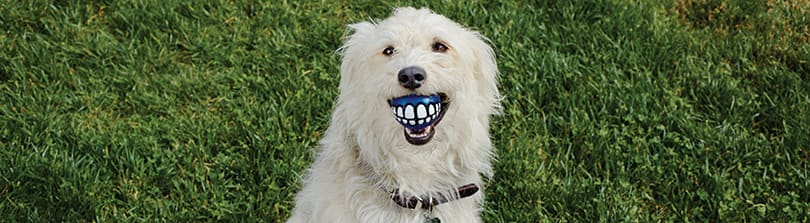 Dog - Health & Wellness