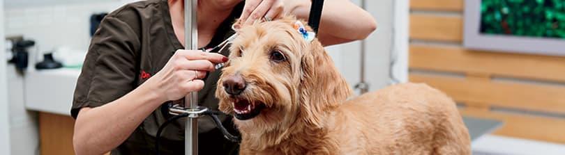 Dog - Grooming