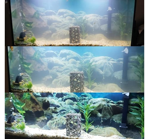 Cloudy Water in Fish Tank