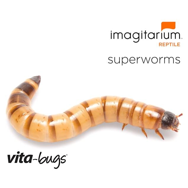 Vita-Bugs Superworms- 500 Count - Carousel image #1