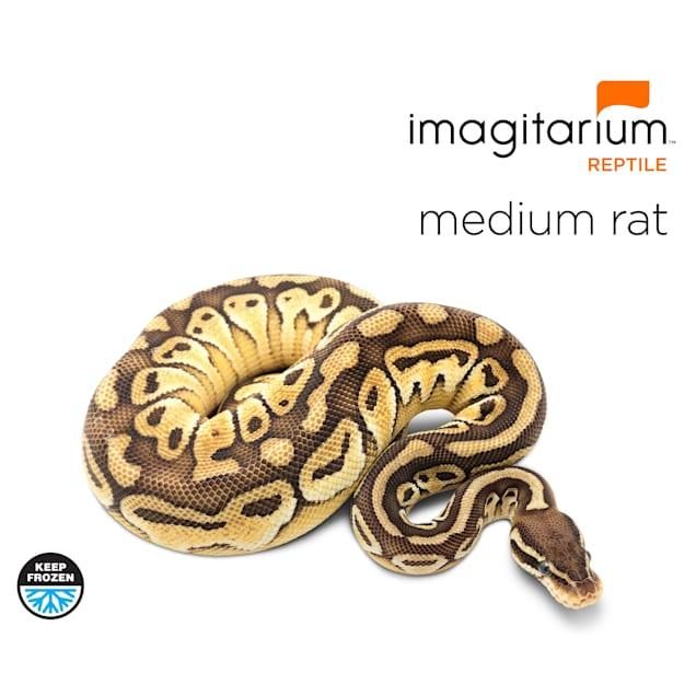 Frozen Medium Rat - 25 Count - Carousel image #1