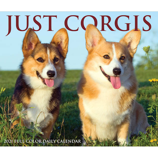 Willow Creek Press Corgis 2021 Box Calendar, Medium - Carousel image #1