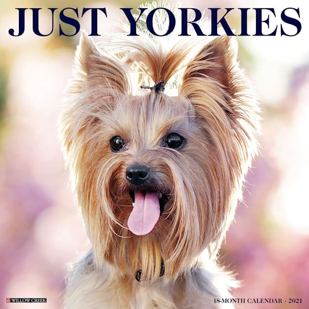 Willow Creek Press Yorkies 2021 Calendar, Large - Carousel image #1