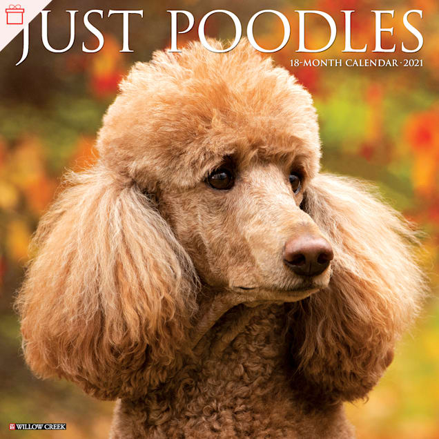 Willow Creek Press Poodles 2021 Calendar, Large - Carousel image #1