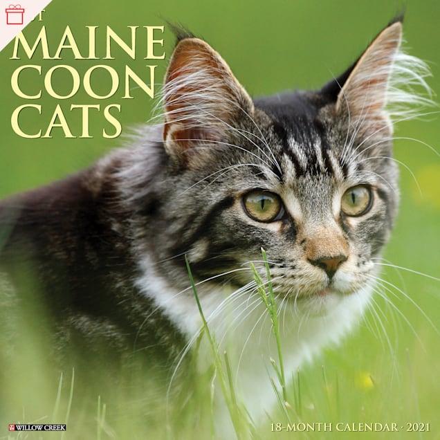 Willow Creek Press Maine Coon Cats 2021 Calendar, Large - Carousel image #1