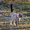 PetSafe Gentle Leader Come with Me Kitty Harness & Bungee Leash - Thumbnail-2