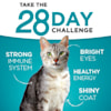 Purina ONE Indoor High Protein Indoor Advantage Ocean Whitefish & Rice Pate Wet Cat Food, 3 oz., Case of 12 - Thumbnail-3