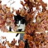 """On2Pets Plum Autumn Round Cat Tree, 60"""" H - Thumbnail-4"""