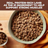 Nature's Recipe Lamb & Rice Recipe Mature Dry Dog Food, 24 lbs. - Thumbnail-4