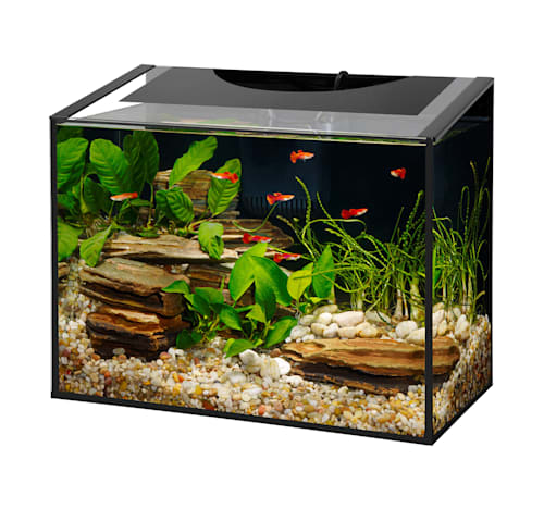 freshwater tank with guppies