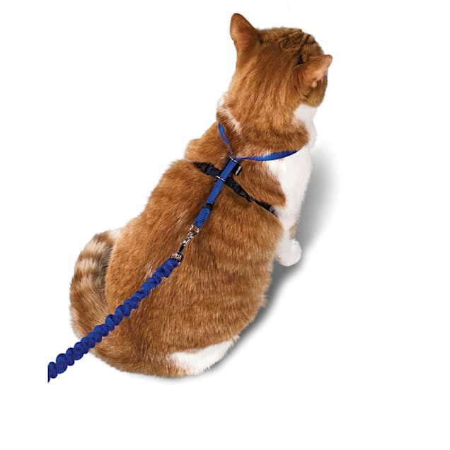 PetSafe Gentle Leader Come with Me Kitty Harness & Bungee Leash - Carousel image #1