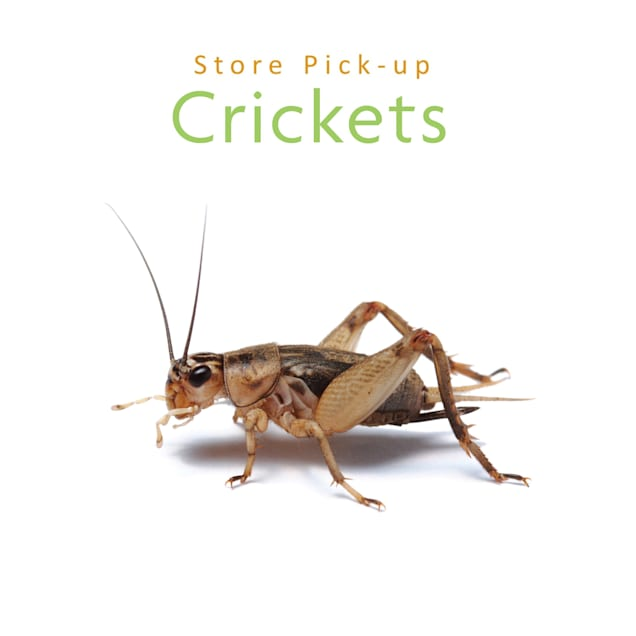 Vita-Bugs Live Crickets - Store Pickup Only Count of 40, Large - Carousel image #1