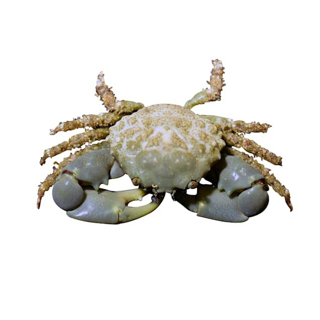 Emerald Crab - Carousel image #1