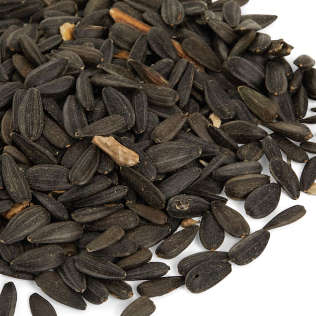 Petco Black Oil Sunflower Seed Wild Bird Food, 30 lb Bag - Carousel image #1