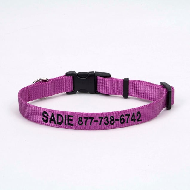 "Coastal Pet Nylon Adjustable Personalized Dog Collar in Orchid, 1"" Width - Carousel image #1"
