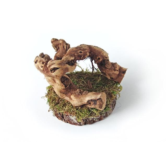 Mac's Creations Reptile Tree, Medium - Carousel image #1