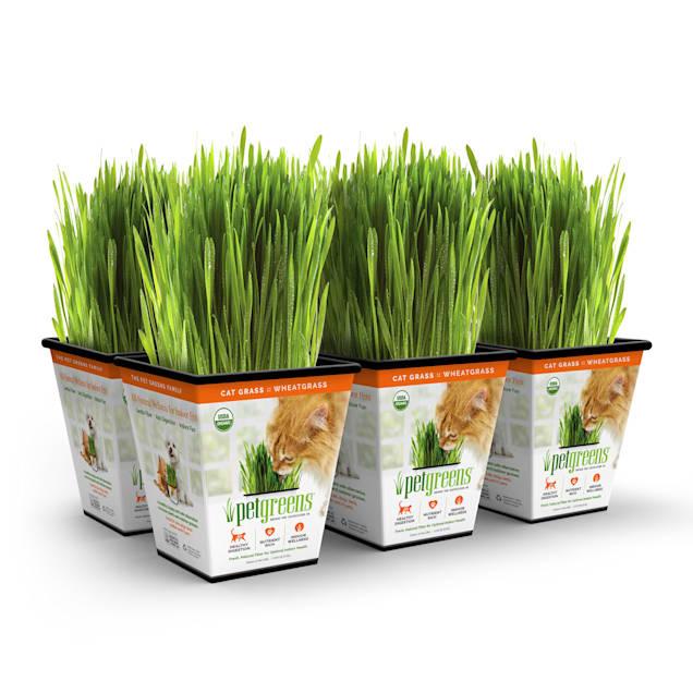 Pet Greens Cat Grass Original Wheatgrass, Pack of 6 - Carousel image #1