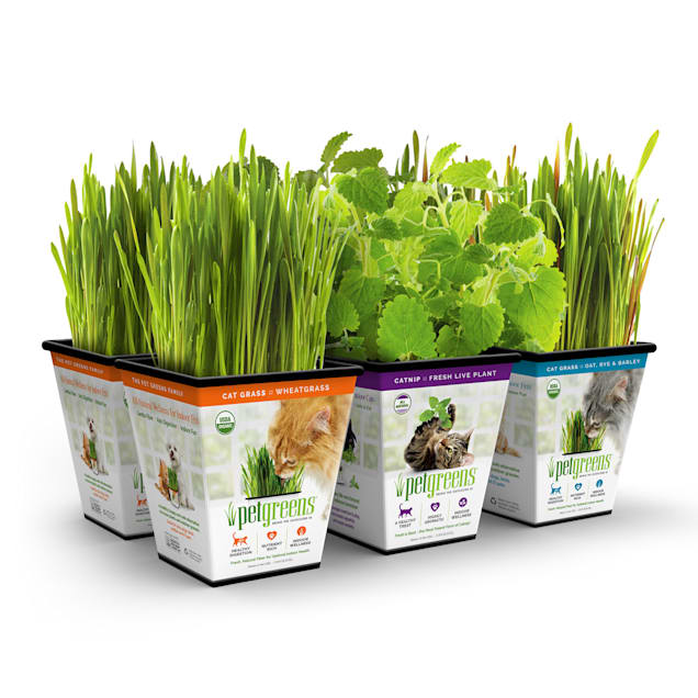 Pet Greens Multi-Pack Live Cat Grass and Catnip, Pack of 6 - Carousel image #1