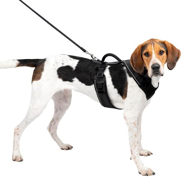 "PetSafe EasySport Black Dog Harness, Large, 28"" - 42"" Girth - Carousel image #1"