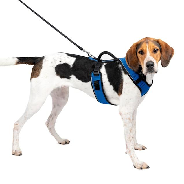 "PetSafe EasySport Blue Dog Harness, Large, 28"" - 42"" Girth - Carousel image #1"