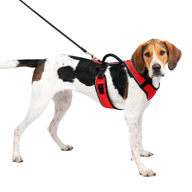 "PetSafe EasySport Red Dog Harness, Large, 28"" - 42"" Girth - Carousel image #1"