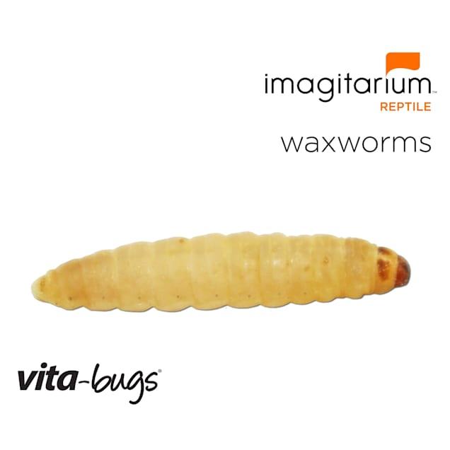 Vita-Bugs Waxworms, Count of 500 - Carousel image #1