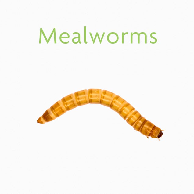 Vita-Bugs Medium Mealworms- 1000 Count - Carousel image #1