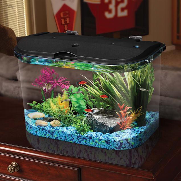 Freshwater Fish Tank