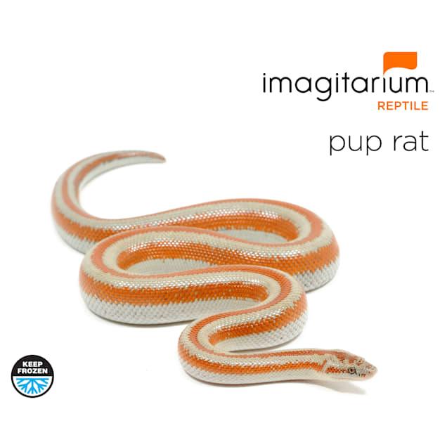 Frozen Pup Rat - 10 Count - Carousel image #1