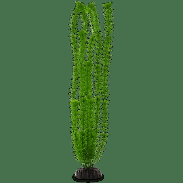Imagitarium Green Ambulia Background Aquarium Plant - Carousel image #1