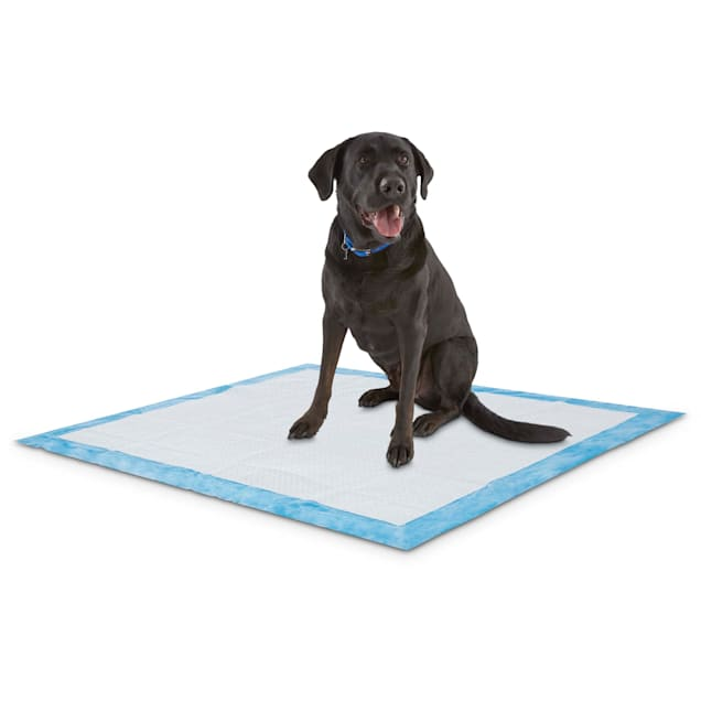 Animaze X-Large Absorbent Dog Potty Pads, Count of 40 - Carousel image #1