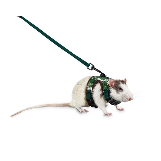 You & Me Tropical Oasis Small Animal Harness and Leash Set, Small - Carousel image #1