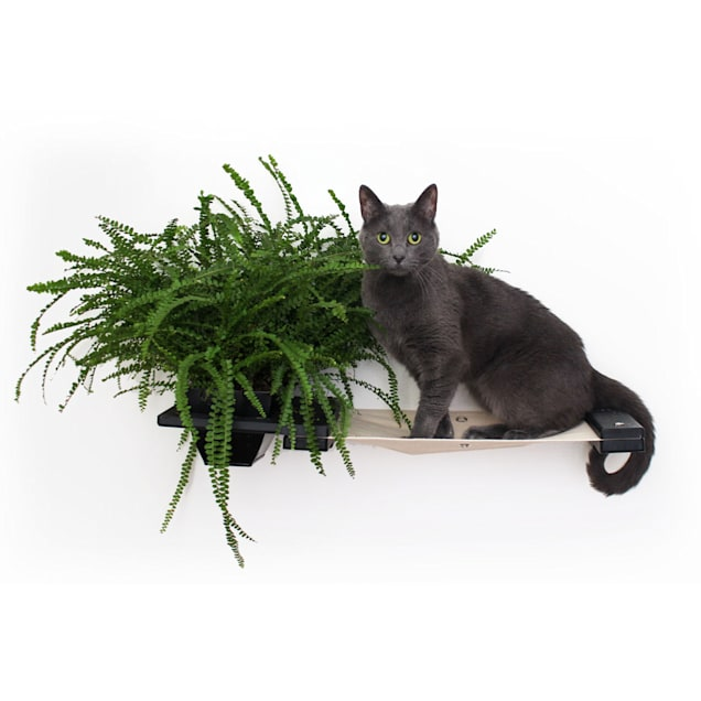 CatastrophiCreations The Cat Mod Planter Shelf for Cats in Onyx, 10 IN W X 3 IN H - Carousel image #1