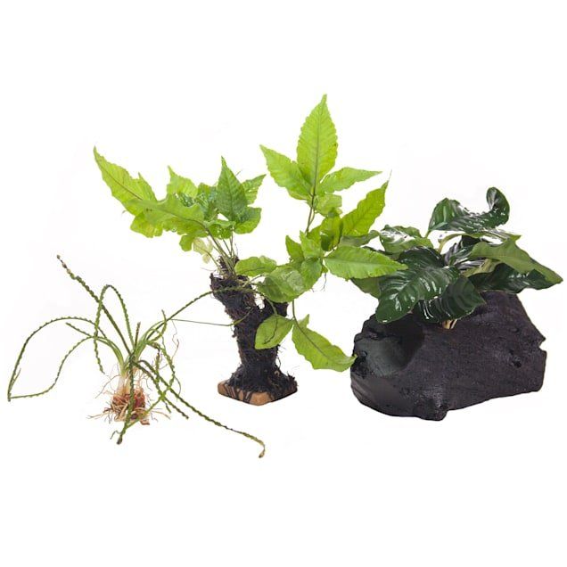 Live Plant Pack 2 - Decor for 10-20 Gallon Tanks - Carousel image #1