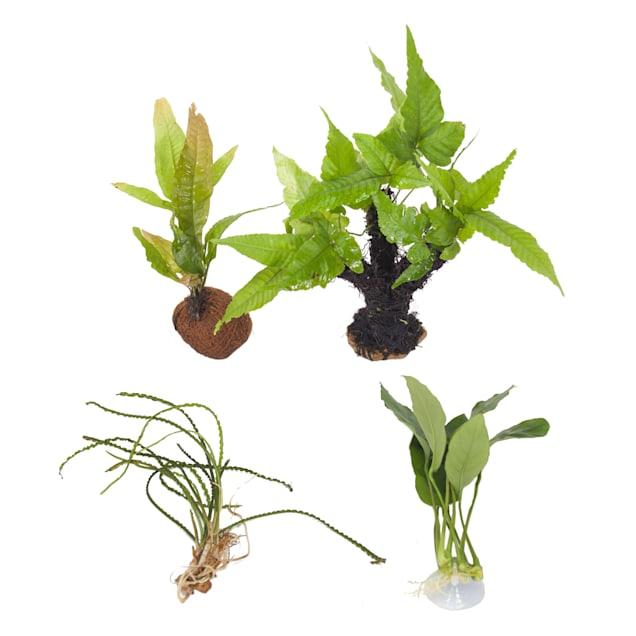 Live Plant Pack 4 - Decor for 20-29 Gallon Tanks - Carousel image #1