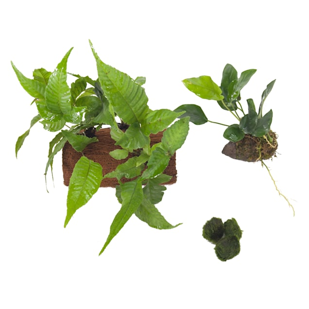 Live Plant Pack 5 - Decor for 10-20 Gallon Tanks - Carousel image #1