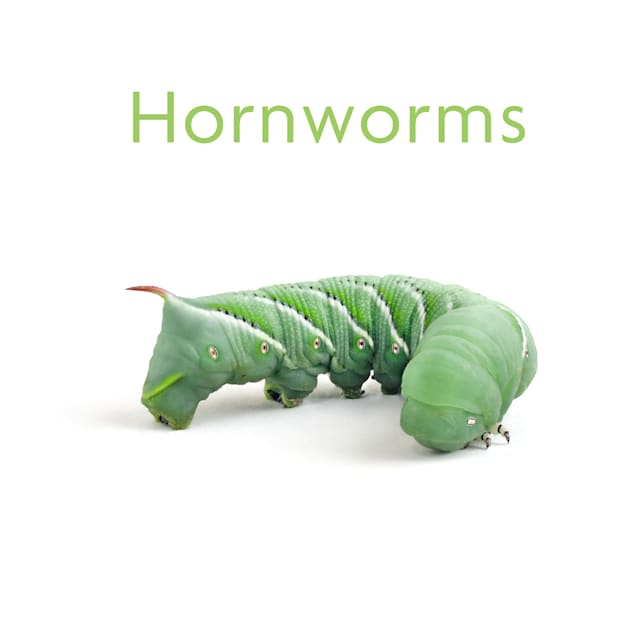 Timberline Hornworms 4 Count Cup - Carousel image #1