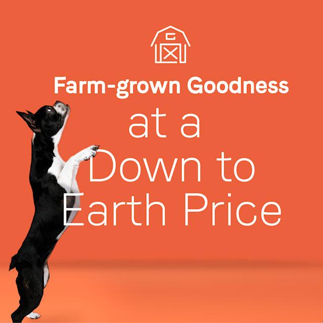 CANIDAE Under the Sun Grain Free Lamb Recipe Adult Dry Dog Food, 40 lbs. - Carousel image #1