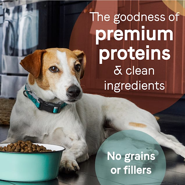 CANIDAE PURE Grain Free Limited Ingredient Real Bison, Lentil & Carrot Recipe Dry Dog Food, 21 lbs. - Carousel image #1