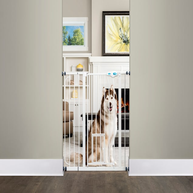 """Carlson Pet Products Extra Tall Walk-Thru Pet Gate with Door, 39""""-38.5"""" W x 36"""" L - Carousel image #1"""