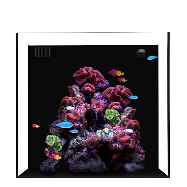 "Waterbox CUBE 10 Gallon Aquarium, 13.8"" L X 14.2"" W X 13.8""H - Carousel image #1"