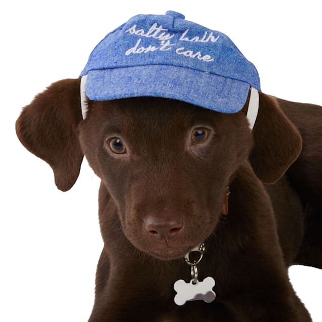 Bond & Co. Salty Hair Don't Care Nautical Dog Cap, Small/Medium - Carousel image #1