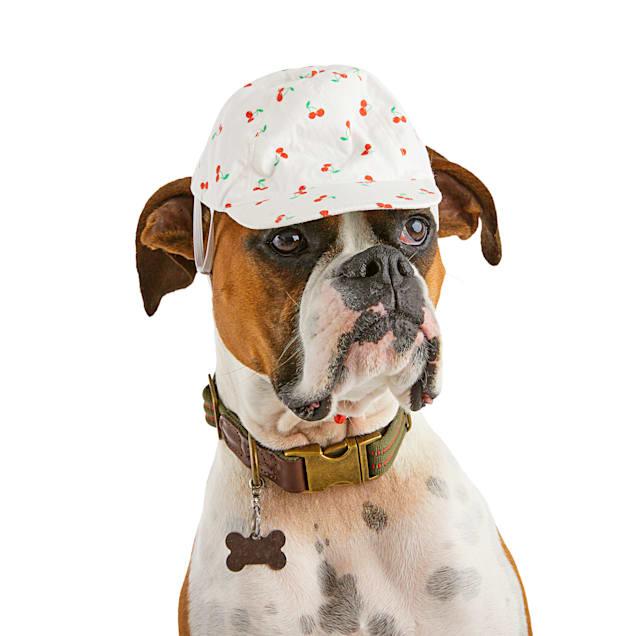 Bond & Co. Cherry Cute Dog Snapback Hat, X-Small/Small - Carousel image #1