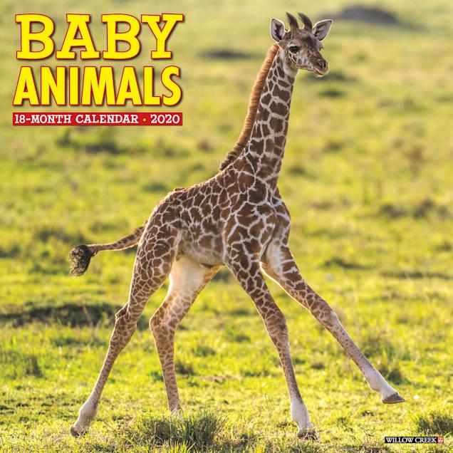 Willow Creek Press Baby Animals 2020 Wall Calendar - Carousel image #1