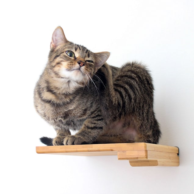 """CatastrophiCreations Tan Step Shelf for Cats, 9"""" W X 2"""" H - Carousel image #1"""
