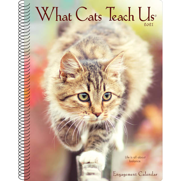 Willow Creek Press What Cats Teach Us 2021 Engagement Calendar, Large - Carousel image #1