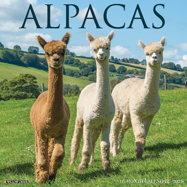 Willow Creek Press Alpacas 2021 Calendar, Large - Carousel image #1