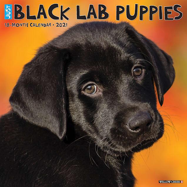 Willow Creek Press Black Lab Puppies 2021 Calendar, Large - Carousel image #1