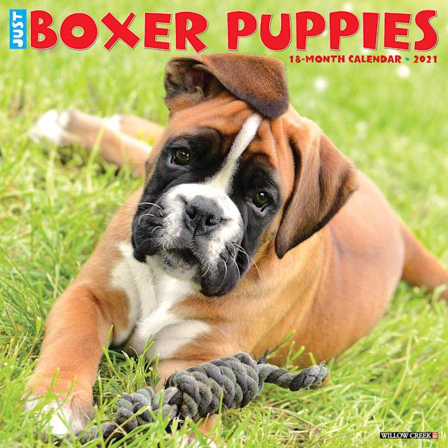 Willow Creek Press Boxer Puppies 2021 Calendar, Large - Carousel image #1