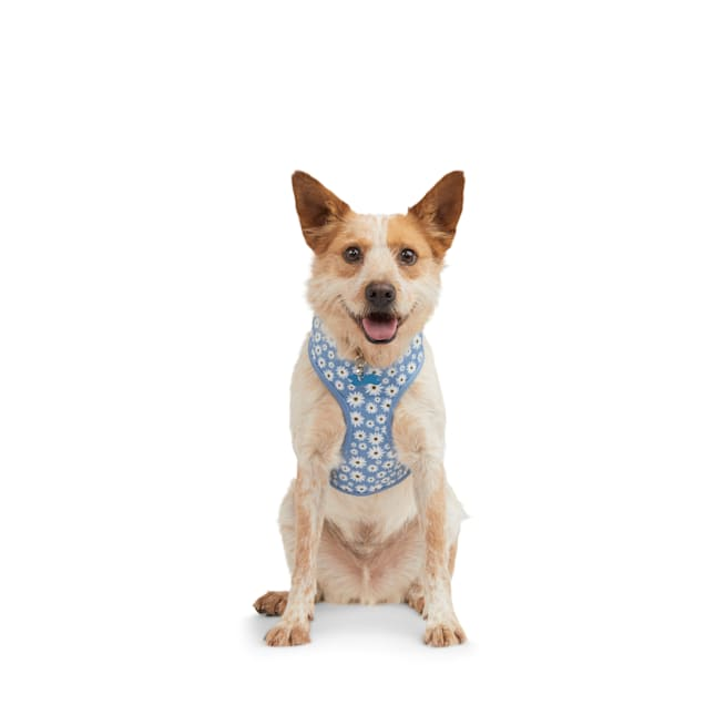 Bond & Co. Started As A Bottle Recycled & Reinvented Happy Daisies Dog Harness, Small - Carousel image #1